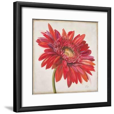 Red Gerber Daisy-Patricia Pinto-Framed Premium Giclee Print
