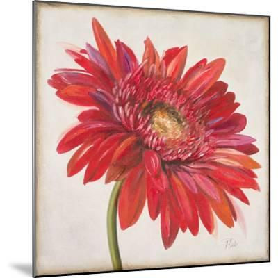 Red Gerber Daisy-Patricia Pinto-Mounted Premium Giclee Print
