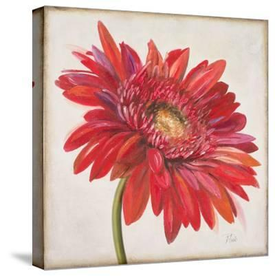Red Gerber Daisy-Patricia Pinto-Stretched Canvas Print