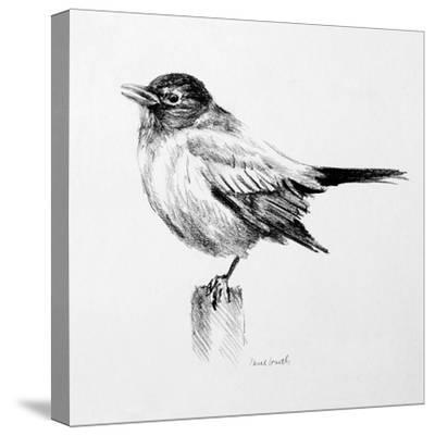 Bird Drawing III-Lanie Loreth-Stretched Canvas Print