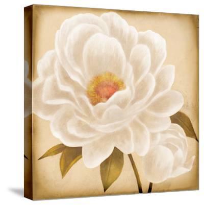 White Peonies I-Vivien Rhyan-Stretched Canvas Print