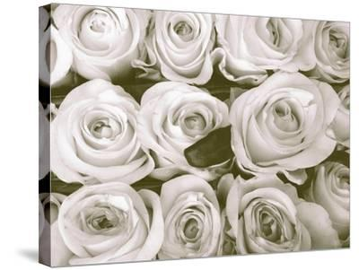 Rose in Bloom-Gail Peck-Stretched Canvas Print