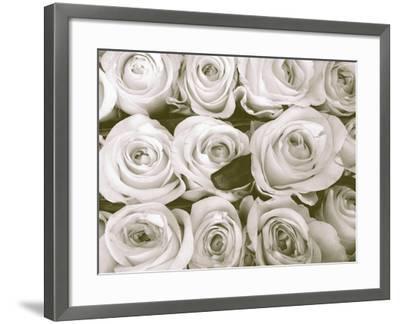 Rose in Bloom-Gail Peck-Framed Art Print