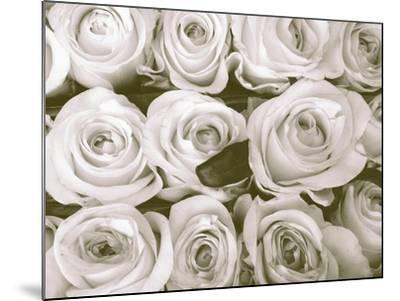Rose in Bloom-Gail Peck-Mounted Art Print