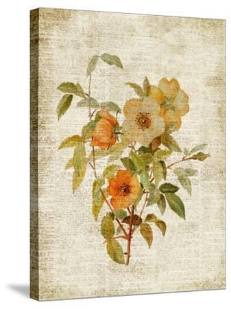Roses on Newsprint I-Lanie Loreth-Stretched Canvas Print