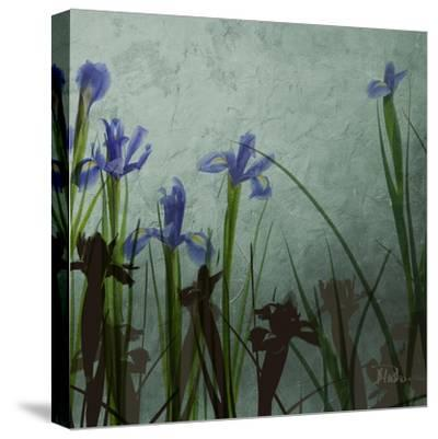 Blue Irises II-Patricia Pinto-Stretched Canvas Print