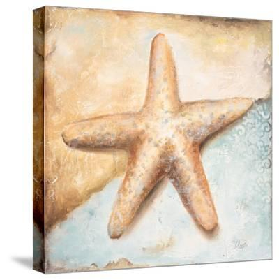 Seashell Collection II-Patricia Pinto-Stretched Canvas Print