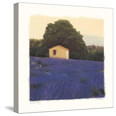 Lavender Country-Amy Melious-Stretched Canvas Print