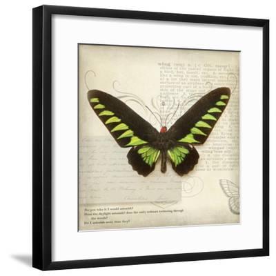 Butterflies Script VI-Amy Melious-Framed Art Print