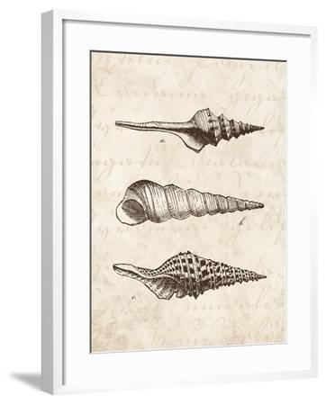 Elegant Shells II-N^ Harbick-Framed Art Print