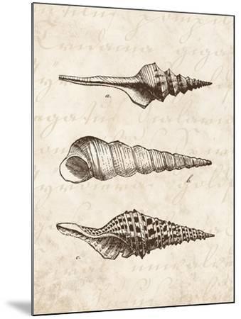 Elegant Shells II-N^ Harbick-Mounted Art Print