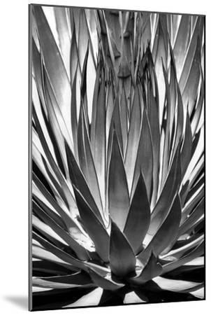 Agave Finale BW-Douglas Taylor-Mounted Art Print