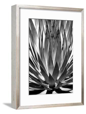 Agave Finale BW-Douglas Taylor-Framed Art Print