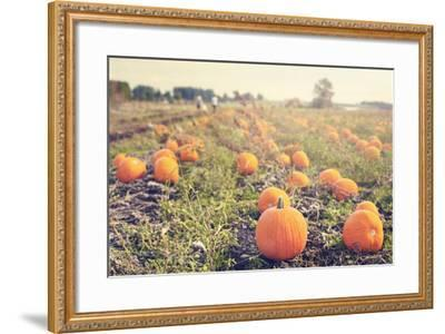Pumpkin Patch-Roberta Murray-Framed Art Print