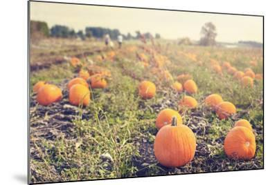 Pumpkin Patch-Roberta Murray-Mounted Art Print