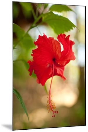 Red Hibiscus-Erin Berzel-Mounted Art Print