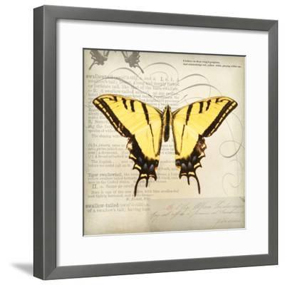 Butterflies Script V-Amy Melious-Framed Premium Giclee Print