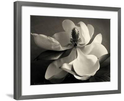 Magnolia Bloom-Amy Melious-Framed Art Print