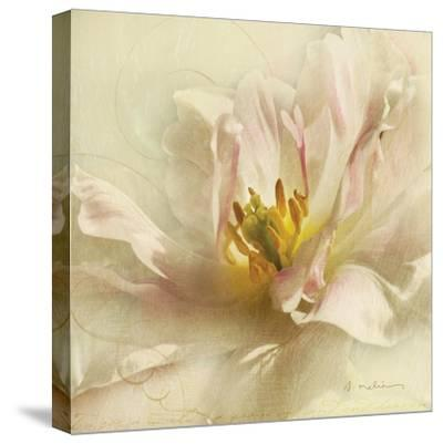 Ivory Romance II-Amy Melious-Stretched Canvas Print