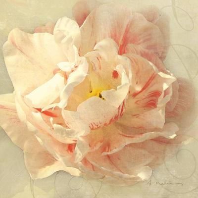 Ivory Romance I-Amy Melious-Framed Art Print
