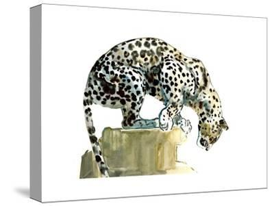 Spine (Arabian Leopard), 2015-Mark Adlington-Stretched Canvas Print