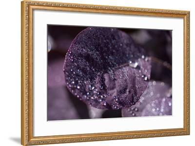 Purple Leaves III-K.B. White-Framed Photographic Print