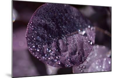 Purple Leaves III-K.B. White-Mounted Photographic Print