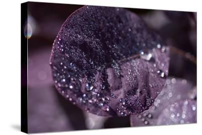 Purple Leaves III-K.B. White-Stretched Canvas Print
