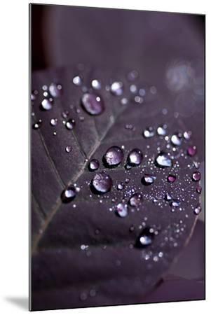 Purple Leaves II-K.B. White-Mounted Photographic Print