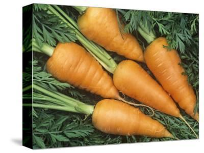 Carrots, Red Cored Chantenay Variety (Daucus Carota)-Wally Eberhart-Stretched Canvas Print