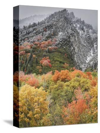 An Autumn Snowfall Decorates the Mountainsides and Trees of Little Cottonwood Canyon-Don Grall-Stretched Canvas Print