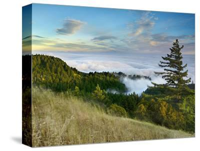 Fog Rolling over the Lower Hills at Mt. Tamalpais On A Late Spring Evening, California, USA-Patrick Smith-Stretched Canvas Print