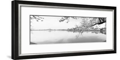 Cherry Blossoms at the Lakeside, Washington DC, USA--Framed Photographic Print