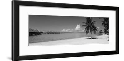 Palm Tree on the Beach, Moana Beach, Bora Bora, Tahiti, French Polynesia--Framed Photographic Print