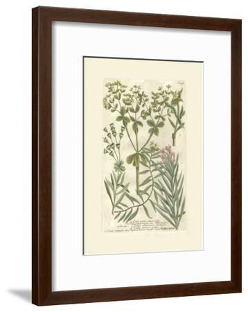 Garden Varietals III-Johann Wilhelm Weinmann-Framed Art Print