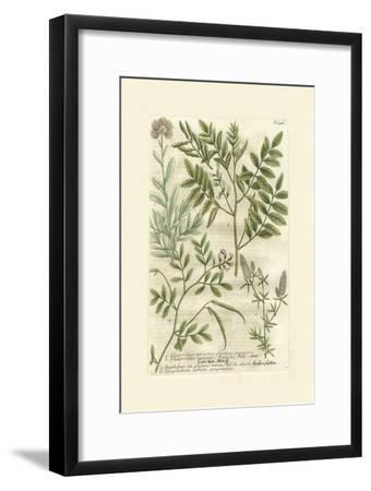 Garden Varietals II-Johann Wilhelm Weinmann-Framed Art Print