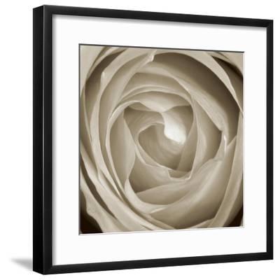 Rose Dawn II-Renee W^ Stramel-Framed Art Print