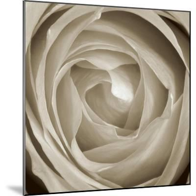 Rose Dawn II-Renee W^ Stramel-Mounted Art Print