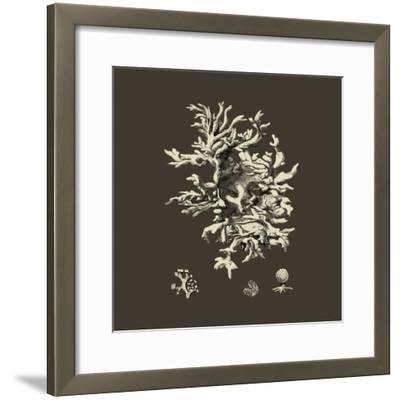Chocolate & Tan Coral III-Vision Studio-Framed Art Print