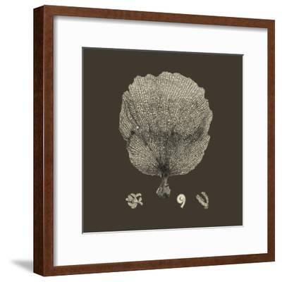 Chocolate & Tan Coral II-Vision Studio-Framed Art Print
