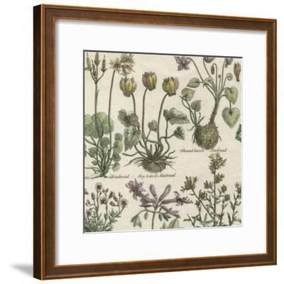 Delicate Garden I-Vision Studio-Framed Art Print