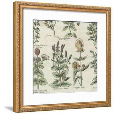 Delicate Garden IV-Vision Studio-Framed Art Print
