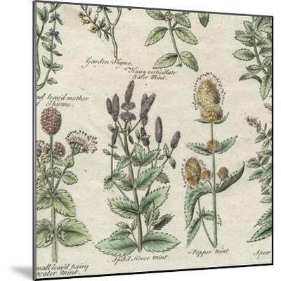 Delicate Garden IV-Vision Studio-Mounted Art Print