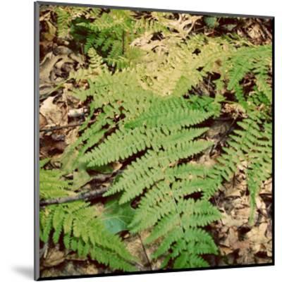 Shady Grove III-Alicia Ludwig-Mounted Art Print