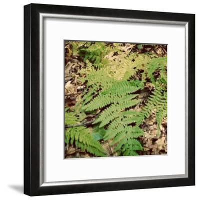 Shady Grove III-Alicia Ludwig-Framed Art Print