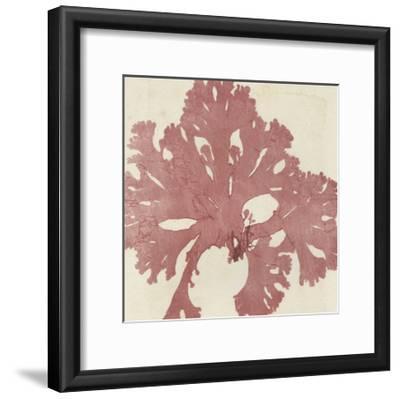 Brilliant Seaweed V--Framed Art Print
