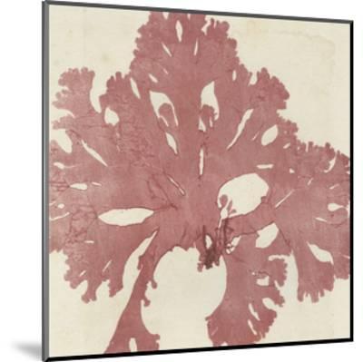 Brilliant Seaweed V--Mounted Art Print