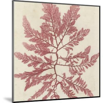 Brilliant Seaweed I--Mounted Art Print