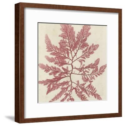 Brilliant Seaweed I--Framed Art Print