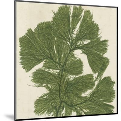 Brilliant Seaweed IV--Mounted Art Print